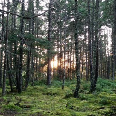 Forest bathing in New Brunswick. There's not as many cypresses as the Asian forest parks but similarly peaceful. | Prairie Telegraph